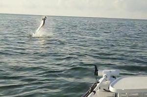 Tarpon Charters in Florida